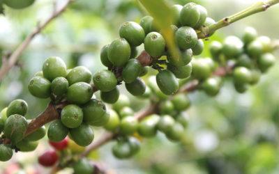 Café de especialidad: ¿qué es? y ¿cómo reconocerlo?