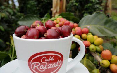 Conoce las variedades de café que existen